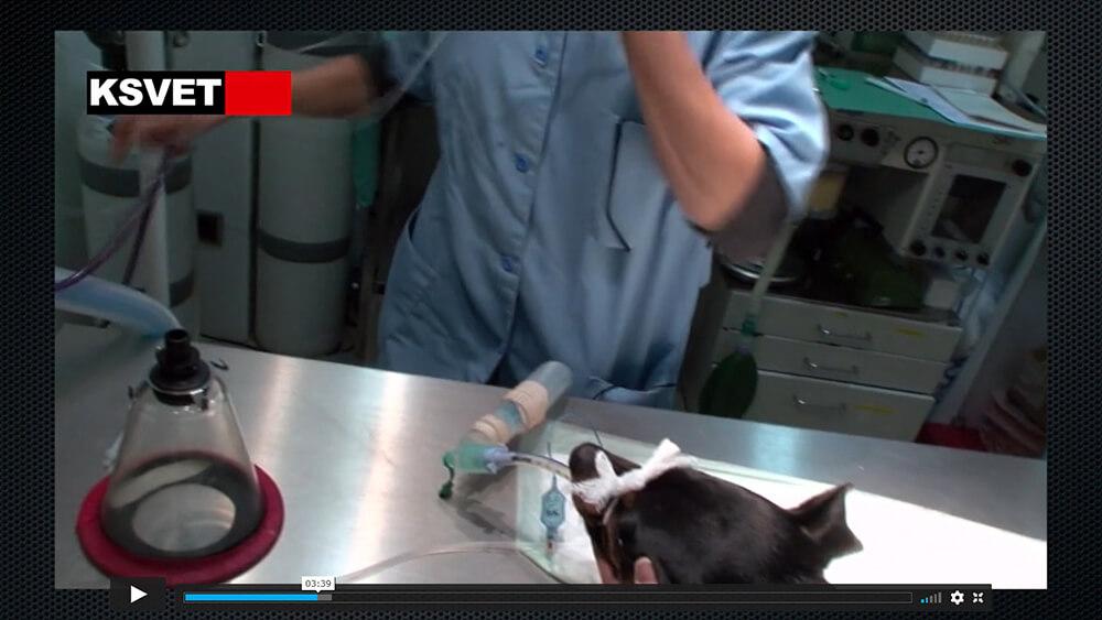 Analgesia epidural y bloqueo testicular para castración de perro II