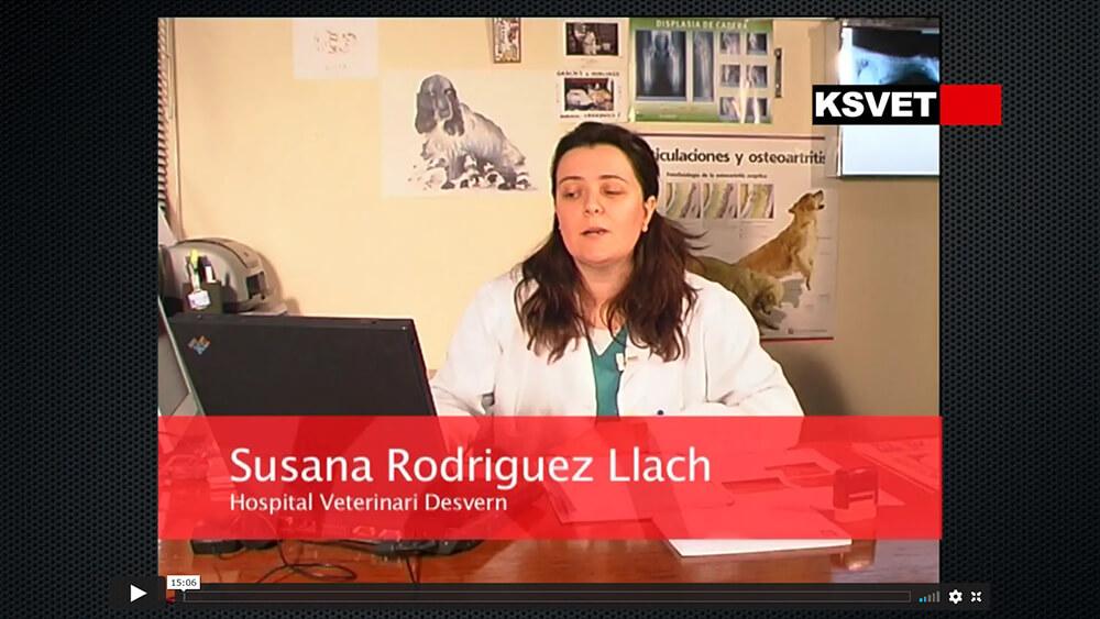 Cálculos vesicales y uretrales en perro