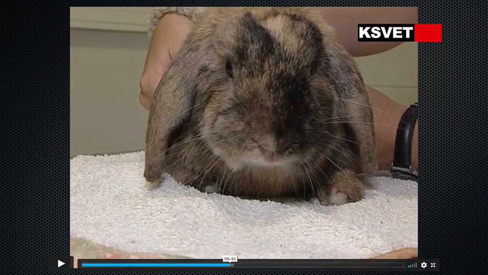 Consejos para una 1ª visita de un conejo